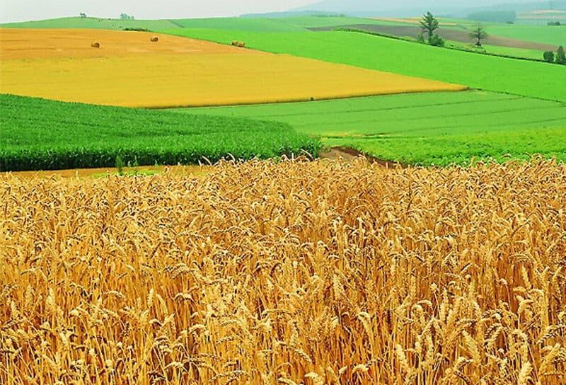 Разрешенное использование земельного участка